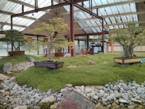 Pavillon des bonsaï