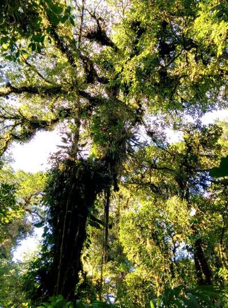 Forêt Santa Elena