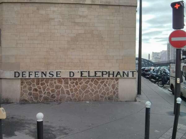 Défense d éléphant