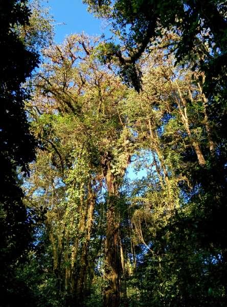 Forêt Monteverde