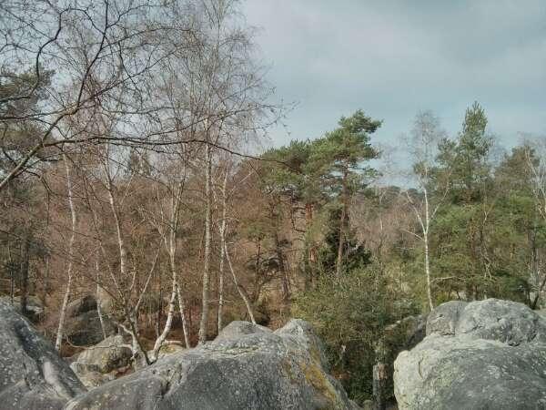 Rocher Canon - Fontainebleau
